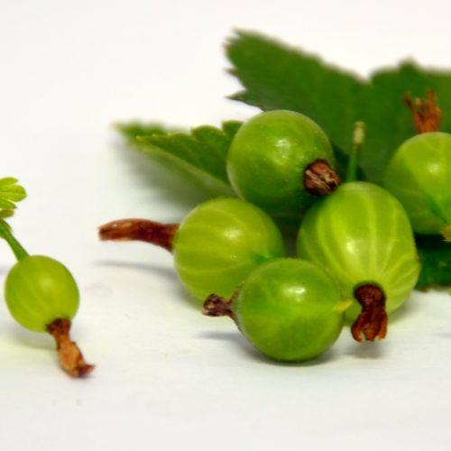 Fruit de groseillier Jahns Prairie vert.