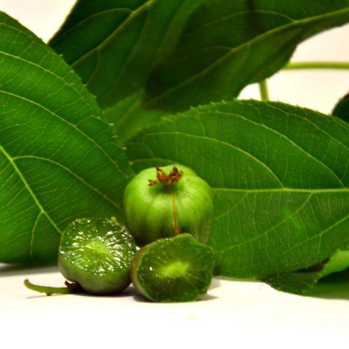 Kiwi arguta en fruit rustique sucré