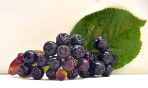 fruit d'aronia