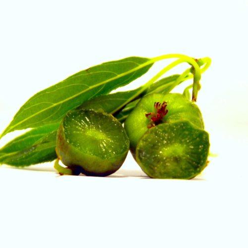 kiwi en fruit